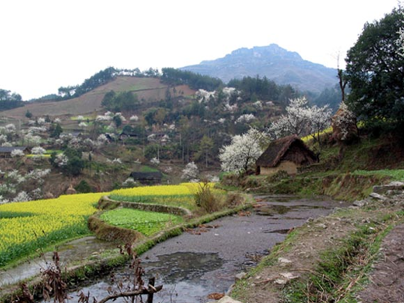 Several day's walk from the nearest city, this mountain village greeted my eyes with the early color of Spring.